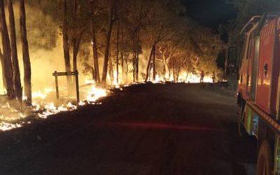 Bushfire Survival Plan