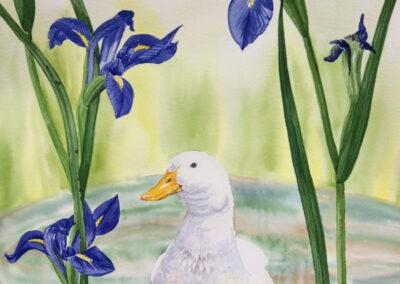 Huey & Water Iris