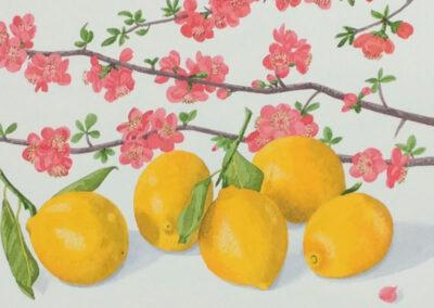 Lemons & Japonica