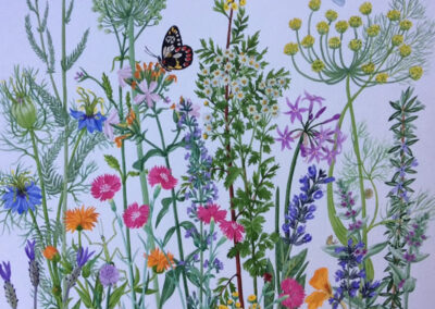 Garden Herbs & Dragonfly