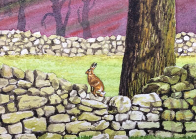 Hare on a Dry Stone Wall