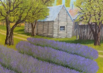 Littleton Lavender